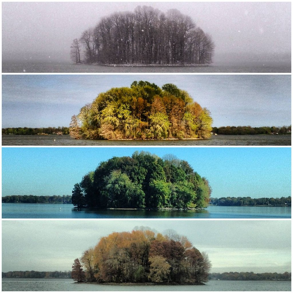 invisiblestories:  Living Planet - The Four Seasons of the Bush (2013) (via likeafieldmouse)