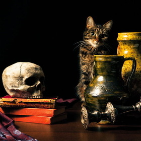 shipwreckedinsc:  Still Life with Cat by -PaulColes- #flickstackr 500px: http://500px.com/photo/33922931