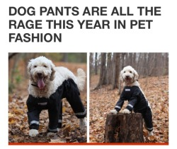 m help puppies dogs dog pants this dog pants meme has gone too far