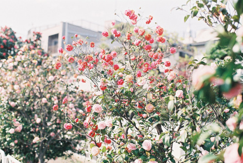 #29 by takumiyashima on Flickr.