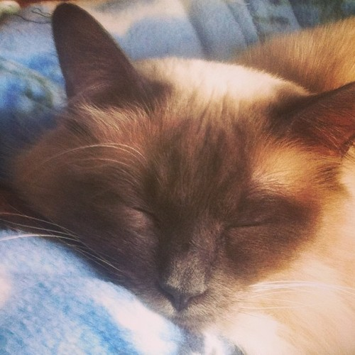 Sleepy #cat pics. #naps #instagram