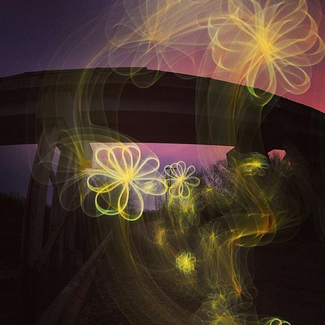 #pictureline #daveblack #lightpainting #flowers