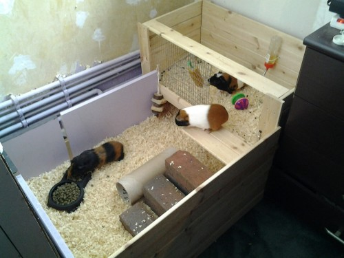 Guinea's cage/run/hutch before.