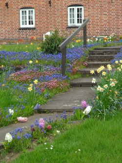 Spring flowers on a farm footpath, Fillongley , Leicestershire, England, All Original Photography by http://vwcampervan-aldridge.tumblr.com
