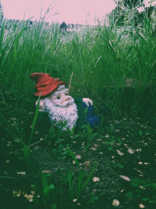 makennasnyder:  Sexy gnome keeping are sprouts happy v