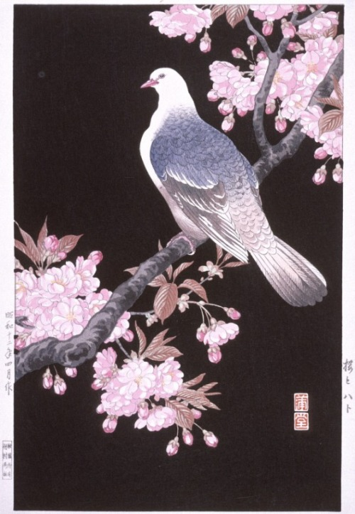 elegyonmars:  Cherry Blossoms and Pigeon Nishimura Hodo, 20th Century Artwork via LACMA