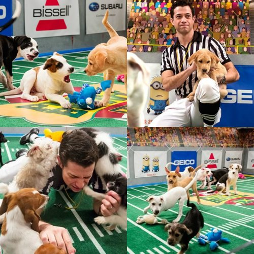 FACT: All of this year's Puppy Bowl puppies tested NEGATIVE for cuteness enhancing substances. Take that Lance Armstrong! For more fun facts about the cutest thing ever on TV, click here: http://bit.ly/11l5TeI