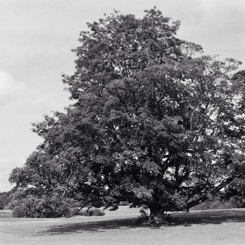 His majesty the Tree #tree #landscape #bw #blackandwhite #noiretblanc  #nature  (à Near Maidstone in Kent)
