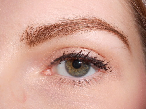 EOTD: Basic Neutral Eye with Liner