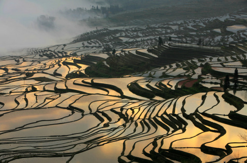 vurtual:  Earth Art (by yu chen)Yuanyang,Yunnan,China