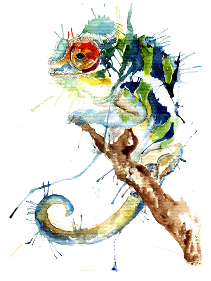 eatsleepdraw:  Colourful chameleon Meg Ashford Illustration :)