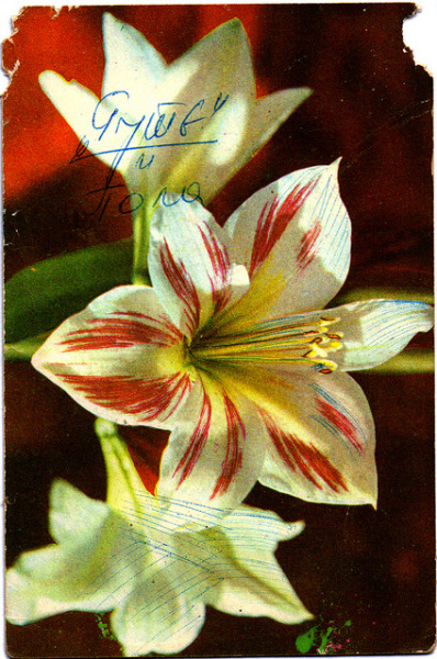 "Printed in Yugoslavia, photo by Antun Mikasovic on Flickr.Old Postcard printed in Yugoslavia, ""Knjizevne Novine"" Beograd, photo by Antun Mikasovic"