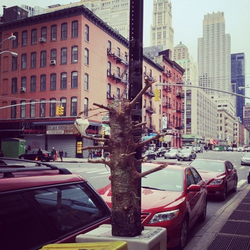 A tree does not grow in Tribeca.