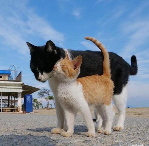 friendly-animals:(Source)