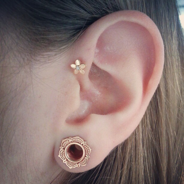 hailerbailer:  Today's ears #anatometal #tawapa