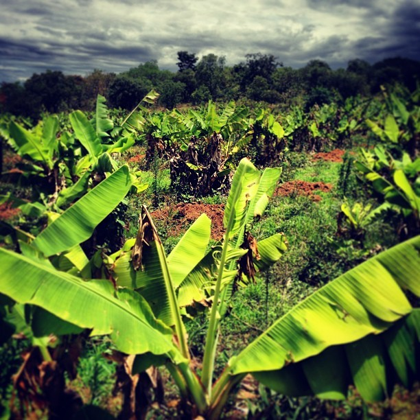 bananas #home #ranch #lusaka #zambia  (at Ngoli Game Ranch)
