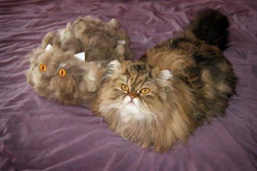 "Cat Sheds Enough Fur to Make a Second Cat ""My hairballs are more impressive."""