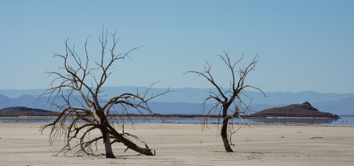 Salton Sea Trees by NicLeister on Flickr.