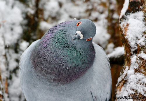 fat-birds:  What are You Lookin' At? by Karen_Chappell on Flickr.