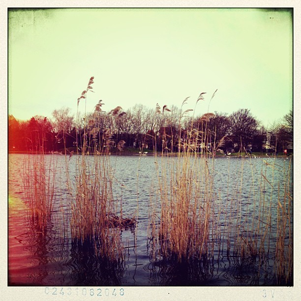 #burgesspark #london #pond #canes #lightleaks #water