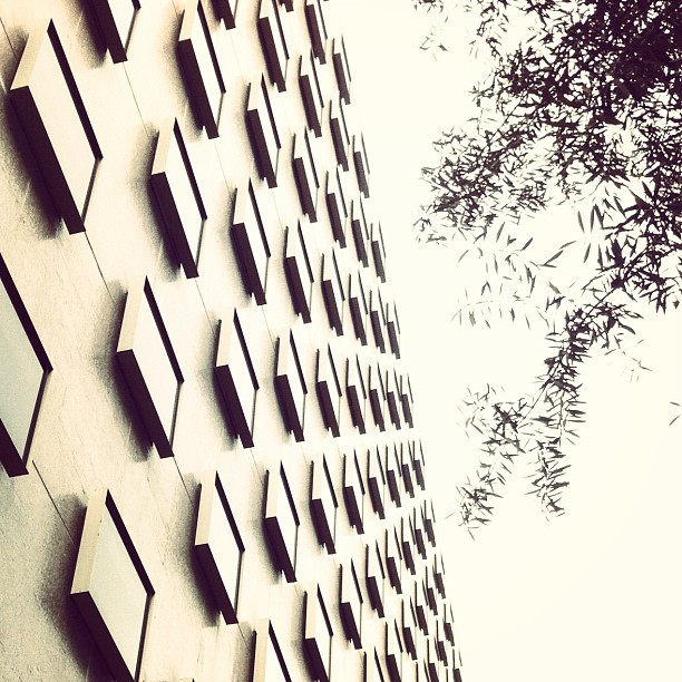 #bunche #lookingup #ucla