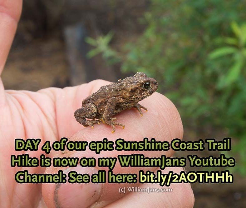 Sunshine Coast Trail VIDEO Day 4 is now uploaded to my WilliamJans Youtube Channel. See it here: bit.ly/2AOTHHh (at Sunshine Coast Trail)