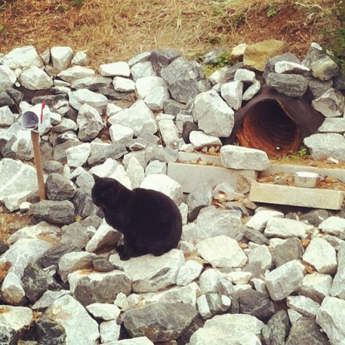 This cat lives on the Beltline, has its own mailbox and is named Piper. (If anyone knows anything else about this beautiful thing, please share! Google doesn't seem to know much.) (Also it took me too long to realize the cat was probably named after the culvert pipe it [apparently] hangs around the mouth of all day.)