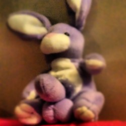 See….Even bunnies get morning WOOD Lmfao    #goodmorning #morning #day #TagsForLikes #daytime #sunrise #morn #awake #wakeup #wake #wakingup #ready #sleepy #breakfast #tired #sluggish #bed #snooze #instagood #earlybird #sky #photooftheday #gettingready #goingout #sunshine #instamorning #work #early #fresh #refreshed #funny #lol #lmao #lmfao #TagsForLikes #hilarious #laugh #laughing #tweegram #fun #friends #photooftheday #friend #wacky #crazy #silly #witty #instahappy #joke #jokes #joking #epic #instagood #instafun #funnypictures #haha #humor