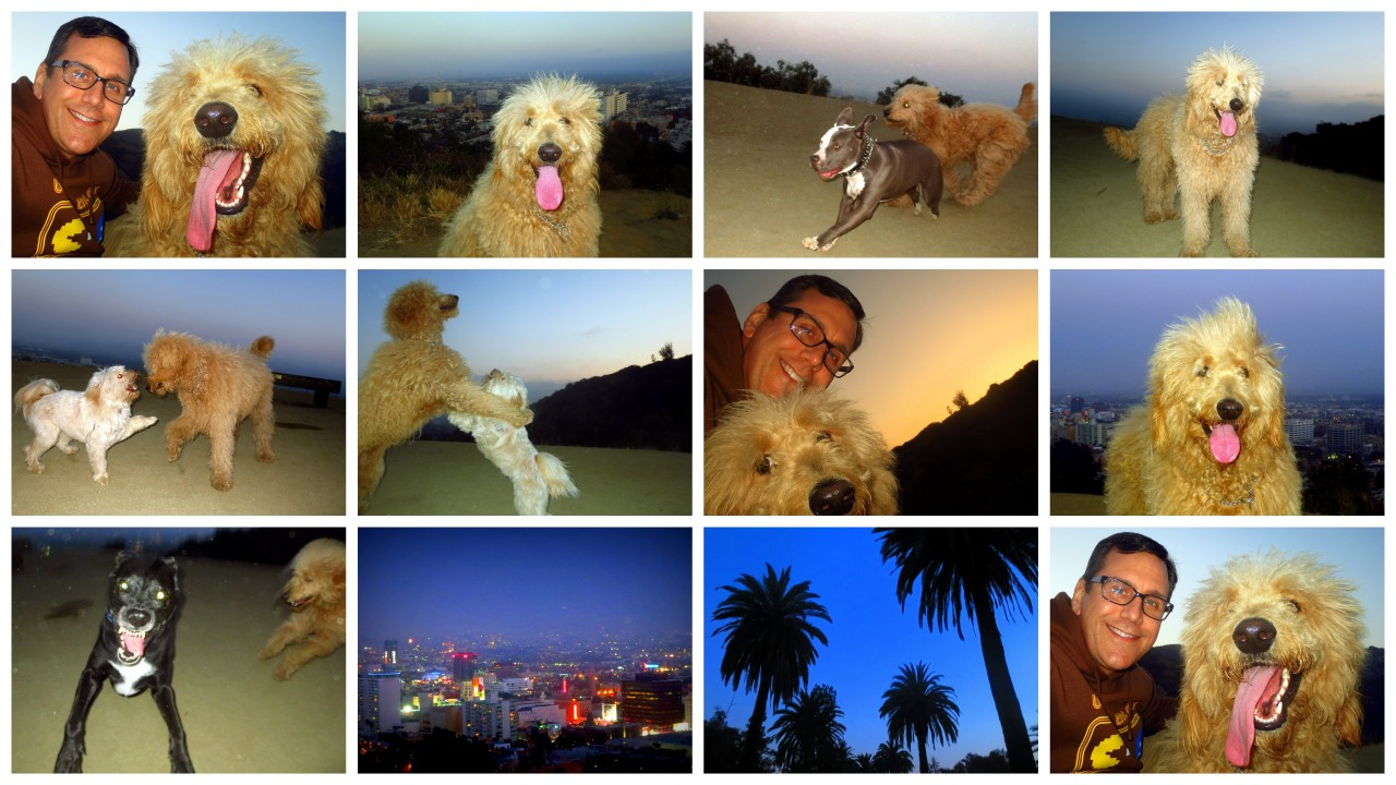 It was really hazy in LA today, but Ollie had a good time at Runyon Canyon anyway!