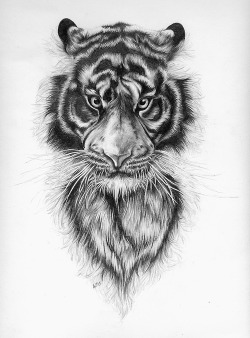 eatsleepdraw:  A study in fur. Pencil on paper.  My tumblr