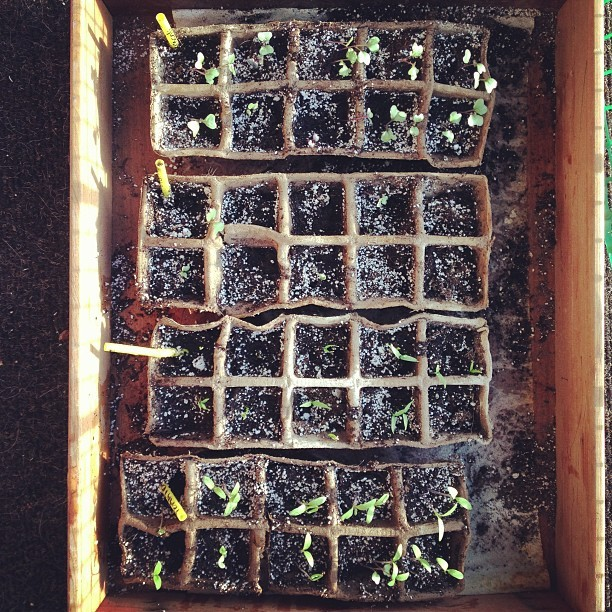 They've all sprouted :) broccoli, cauliflower, bell peppers, and tomatoes