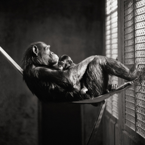vurtual:  Captivity (by Brian Day)