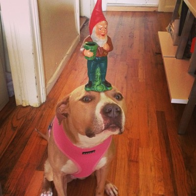 ellethedog:  There are gnome gnomes and there are gnome ungnomes.