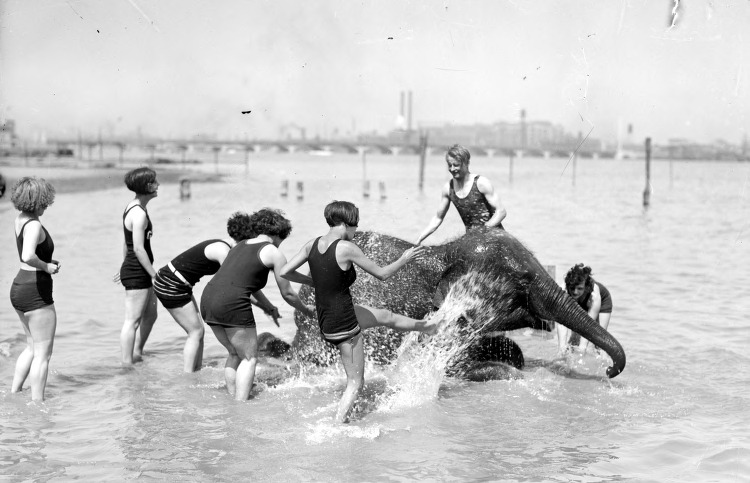 detroitland:  Sheba the elephant with swimmers, undated.