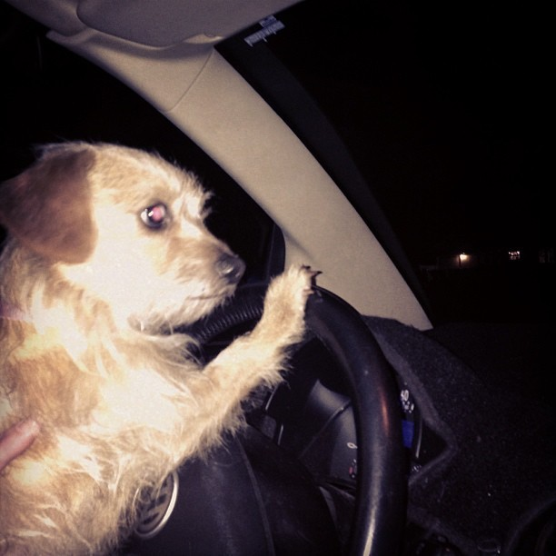 That's my dog driving the car the other night! Haha