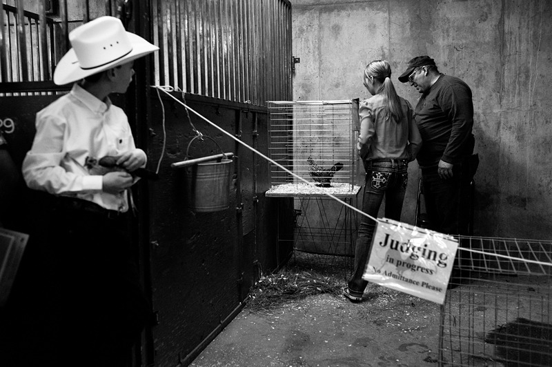 Poultry Showmanship competition at the 2013 National Western Stockshow. © Jason Paul Roberts