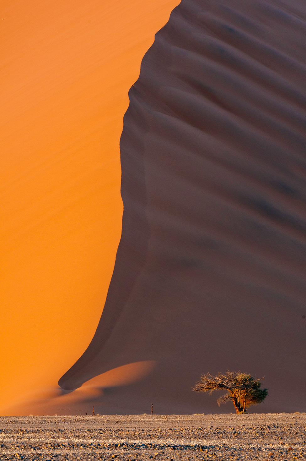 smithsonianmag:  Photo of the Day: Lone Acacia, Sossusvlei Sand Dunes Photo by Bob Bush (Altadena, California); Nambia  look at that tree