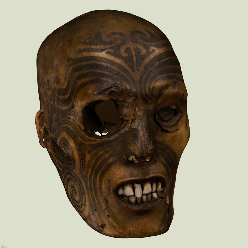 The famous tattooed and preserved head of a Maori warrior. The Rouen Museum of Natural History in France formally returned this artifact to the delegation of elders, New Zealand Embassy officials and representatives from Te Papa Tongarewa, New Zealand's national museum. This is the culmination of years of legal wrangling in France. The head, a sacred cultural object to the Maori, was originally preserved as a reminder of a victory in battle. The tattoos indicate high rank and the heads of elaborately-tattooed warriors would be kept as prized objects by the winners. You can read more about this artifact here