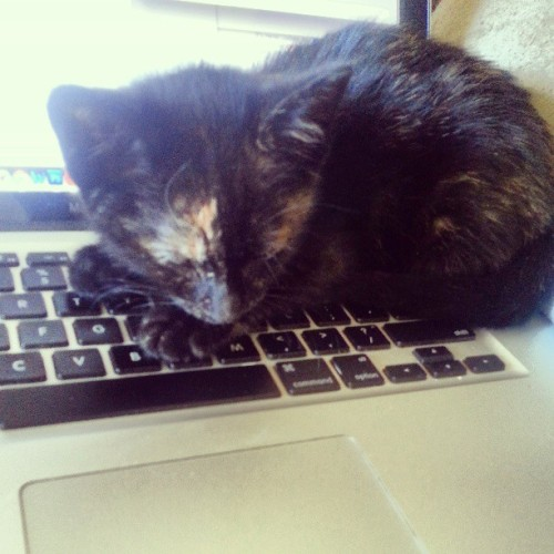 Anti-productivity kitten
