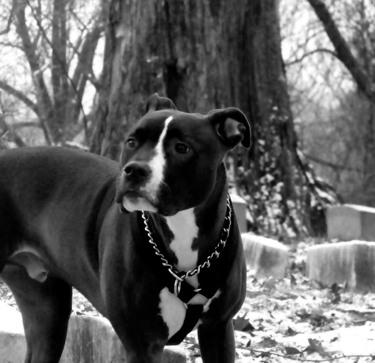 #Photography #pet #Animal #graveyard #blackandwhite #nature #black #art #artist #eric #f4f