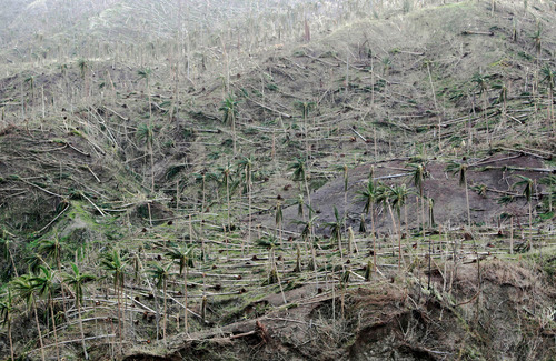 olio-ataxia:  Coconut trees knocked down by Typhoon Bopha in the coastal town of Boston, Davao Oriental in southern Philippines, on December 10, 2012 Erik De Castro: Typhoon Bopha  My grandfather was telling me that coconut trees are pretty resilient, and never in his 87 years has he ever seen them knocked down by a typhoon. Only with Bopha. It's like they were mere sticks. We were watching the news and we saw how the people of Davao Oriental are desperate for help. Some of them haven't gotten any relief goods for several days. It's good that people are donating, but the question is, are these folks receiving them? How will they get them?