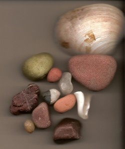 Collected shells and rocks from Homer. I set them inside my scanner and this is the result.