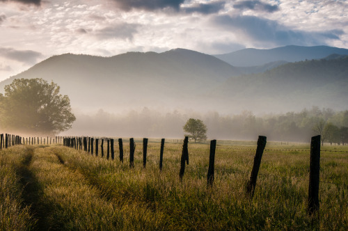 A foggy and misty spring morning begins in Cades Cove in the Great Smoky Mountain National Park.  Photo: Sharon Canter