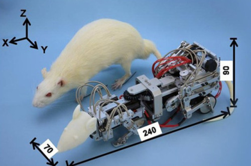Scientists build robot rat to instill fear, depression in hearts of real rodents Oh… wonderful…