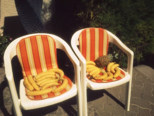 i-think-therefore-i-am-vegan:  Bananas and a pineapple having a sunbath to ripen :)))