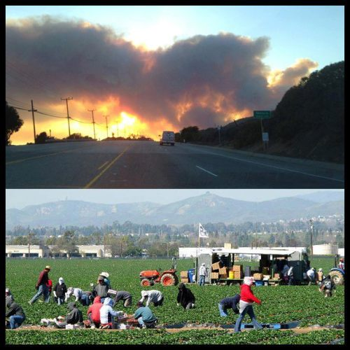"thepeoplesrecord:   California farm workers fired for leaving fields during wildfireMay 8, 2013 More than a dozen farm workers in Southern California were out of a job after walking out of the fields last week, forced indoors because of heavy smoke from a massive wildfire burning nearby. ""Oh, yeah, the smoke was very bad. That's no doubt about that,"" said Lauro Barrajas, of the United Farm Workers. As the blaze, dubbed the Springs Fire, continued to grow in Camarillo May 2, farm workers 11 miles south in Oxnard said they started to feel the effects of the smoke in the strawberry fields. The ashes were falling on top of us, one of them explained, adding ""it was hard to breathe."" Air quality in the region was at dangerously poor levels and 15 workers at Crisalida Farms decided they could not handle it any longer. They left, even though their foreman warned them they would not have a job when they returned. When they went back to the fields May 3, the farm fired them. Barrajas, who is a representative of the UFW, said the workers contacted him for help, even though they were not members of the union. Union representatives met with the farm's upper management and applied a union rule. ""No worker shall work under conditions where they feel his life or health is in danger,"" Barrajas said. In a statement to Telemundo, the farm representative said the workers left without permission while orders still needed to be filled. The company offered to pay them for the hours they'd worked. Later, the company settled with the union and offered to rehire all 15 workers. But only one worker returned. The others took jobs on other farms. One worker said while it hurts to lose work, one's health is more important. SourcePhoto"