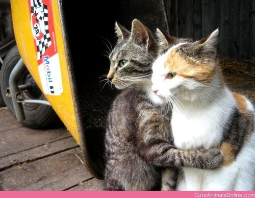 purrrfectionisakitten:  Two Strays on @weheartit.com - http://whrt.it/URU4tx