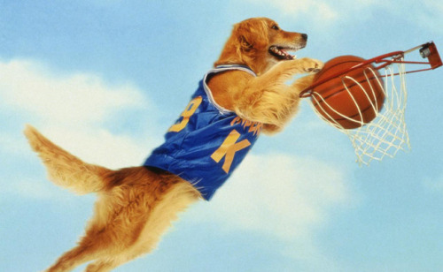 Because You Demanded It: Ranking The 'Air Bud' Films From Least To Most Plausible