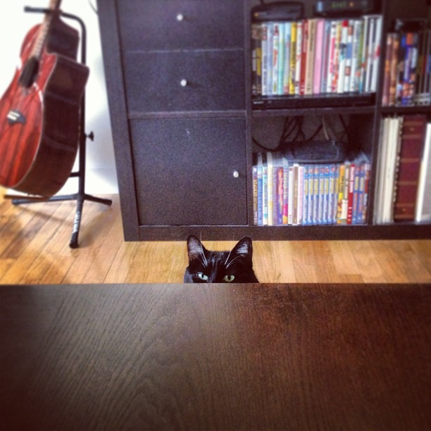 Creepy cat sending me hunger signals. #cat #cats #food #creepy #esp