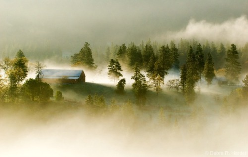 wistfullycountry:  Morning Fog   Debra Harder